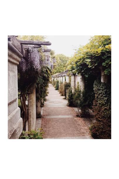 Hampstead Hill Garden and Pergola