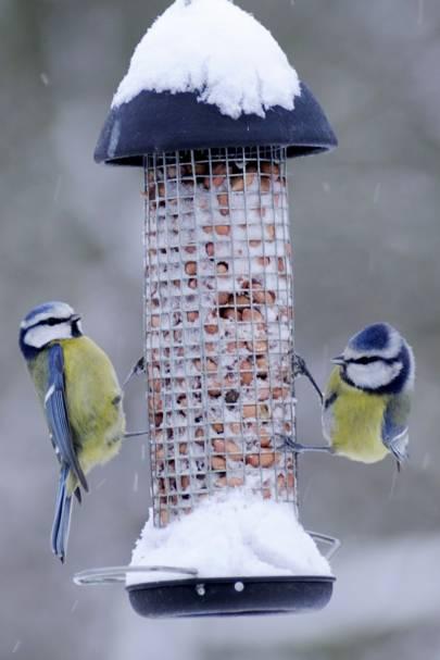 Get them birdwatching