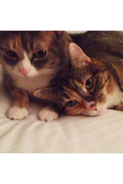 Jinxy and Peaches Wu