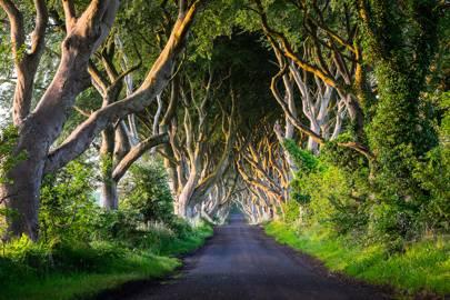 The Dark Hedges, County Antrim, Northen Ireland