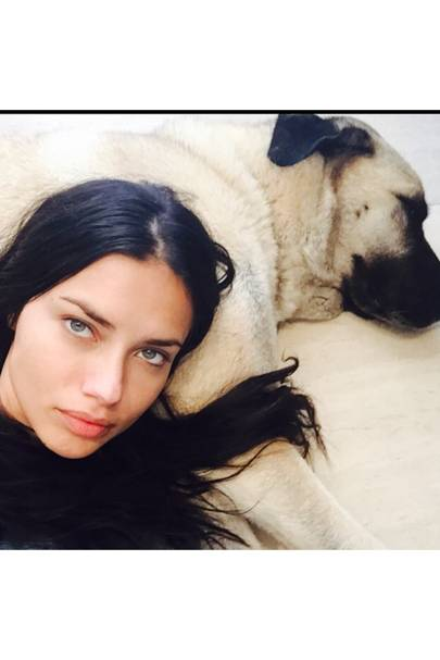 Adriana Lima - 4.8 million followers