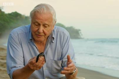 16 years after the first series, David Attenborough brought us Blue Planet 2