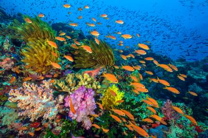 A healthy coral reef in Fiji