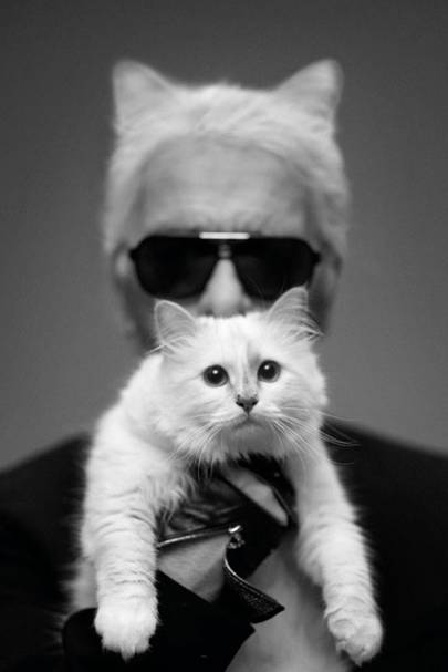Choupette: The Much Loved Pet