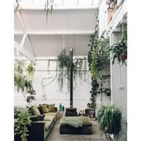 @plantsindecor