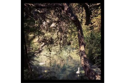 Swan Lake / LA