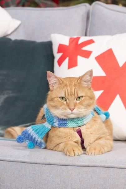 Street Cat Named Bob