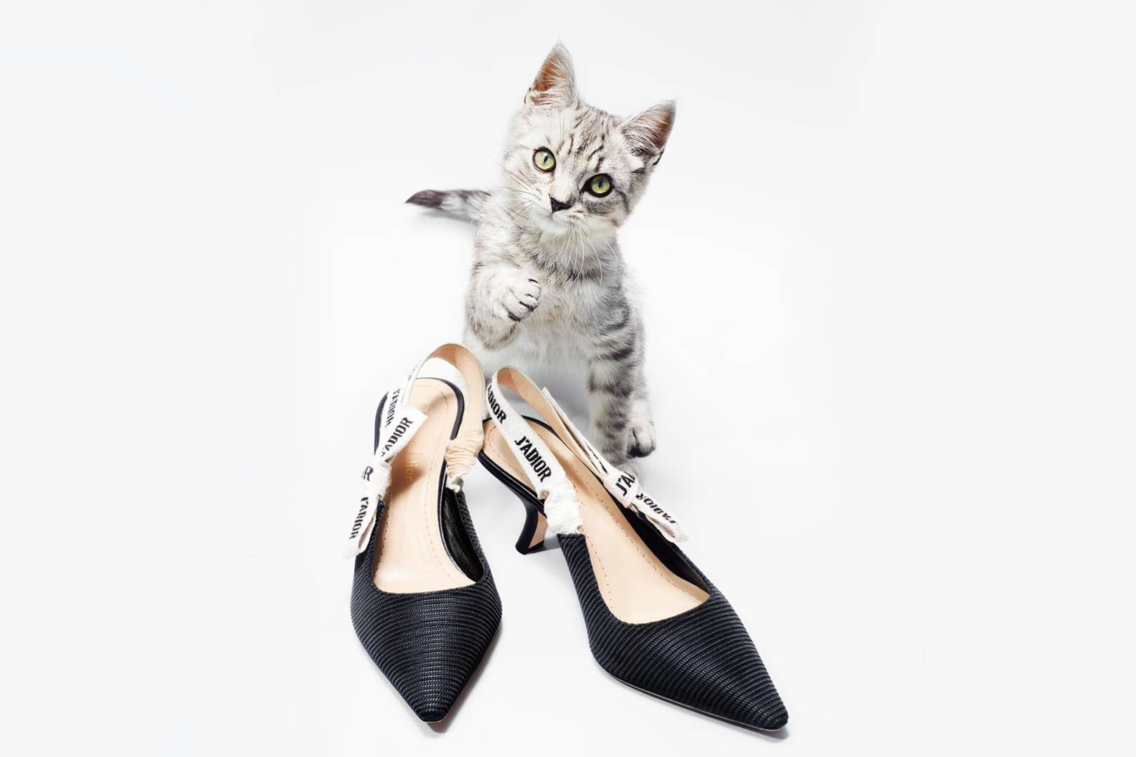e893d1b81ffe Kitten Heels Make A Fashion Comeback